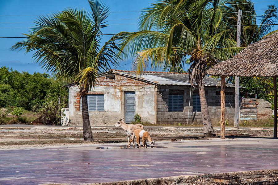 Santa Cruz и Cayo Coco
